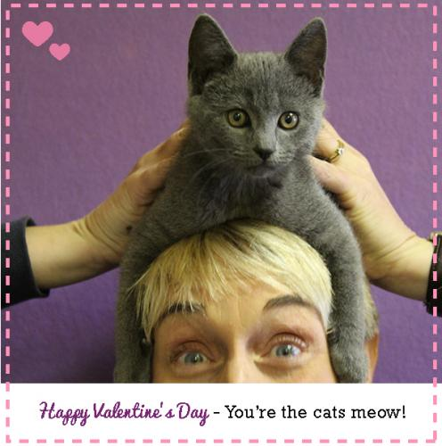 My Punny Valentine-You're the cats meow|sophie-world.com