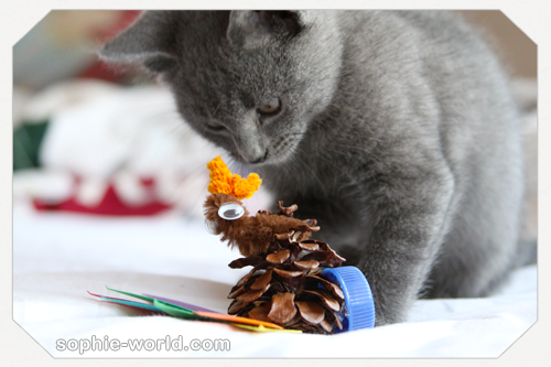 The cat contemplates a pine cone turkey|sophie-world.com