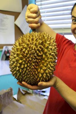 Freda and her durian|sophie-world.com