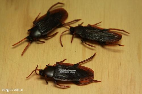 Realistic Roaches  prop gross out party sophie-world.com